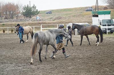 グランドワークの練習で馬との会話を習得しよう