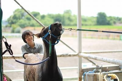 馬と仲良くなる手入れ