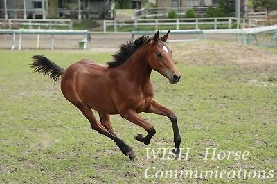 馬のスピード