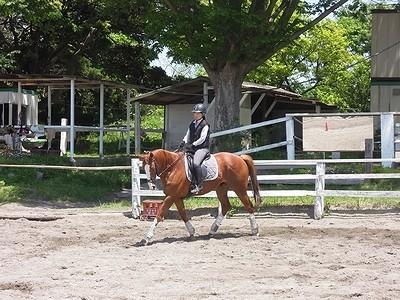 馬と意思疎通を図るコツ