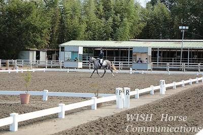 馬の販売 競技会出場済み