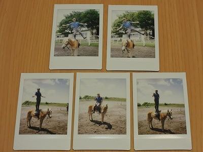 レトロ調の馬写真