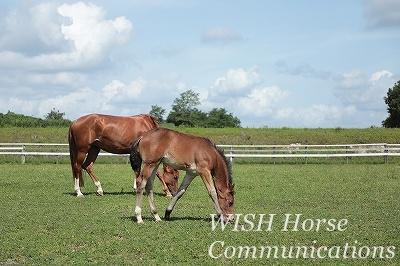 乗馬の放牧