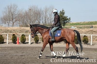 自分の馬を持つ乗馬