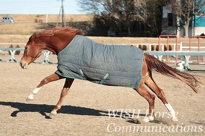 元気な乗馬