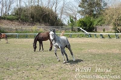 乗馬では馬の目をよく見ること