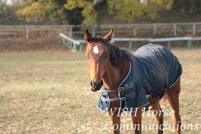 馬に好きになってもらう乗馬