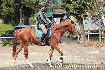 全日本馬場馬術大会2020出場資格獲得