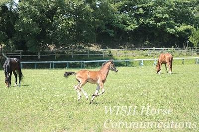 元気に走る子馬