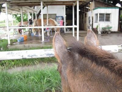 子馬の耳が可愛いことに!