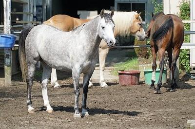 馬と合意する