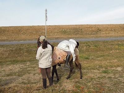 馬との触れ合いこんなにぺったり