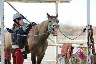 人と馬のいい関係
