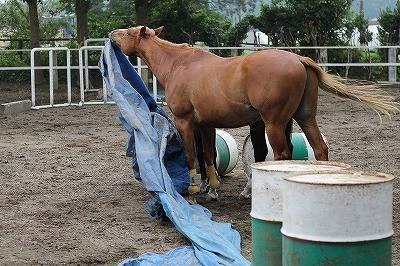 馬とブルーシート