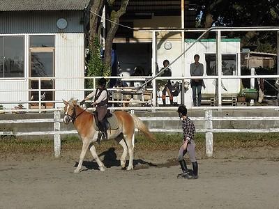 体験乗馬好評で良かった