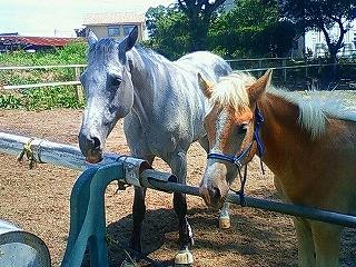 乗馬クラブウィッシュの馬たち
