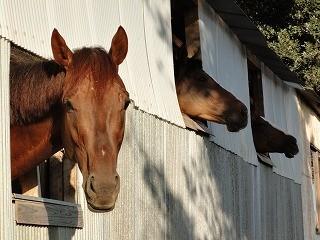 馬が窓からこんにちは!