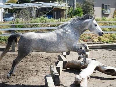 馬の遊ぶ姿