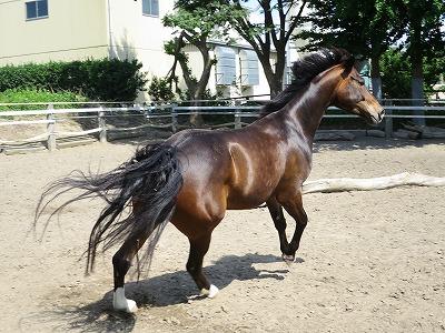 馬を健康に。やればできる。