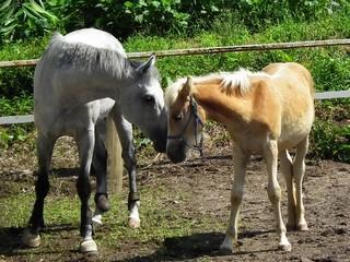 馬と愛情と愛情表現と