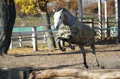 エンジョイしている馬