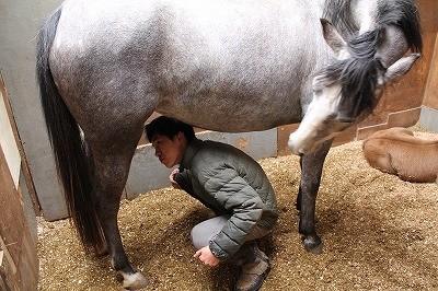 馬のお乳飲んじゃおうかな