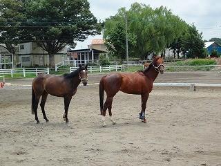 みんな馬と仲良し