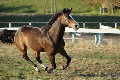 馬のヘルスマネージメント