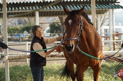 楽しい馬とのふれあい