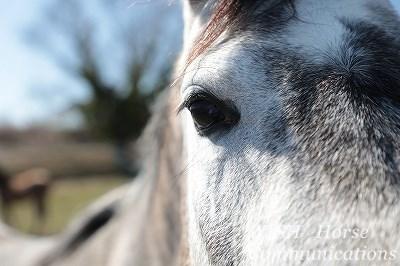 乗馬で必要なのは馬との会話