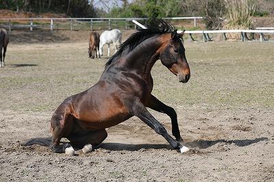 起き上がる馬