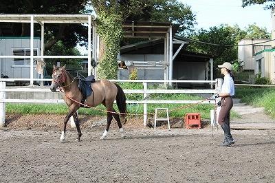 馬と良好な関係を作る