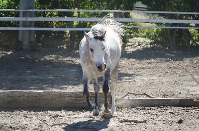 ナチュラルな馬の姿