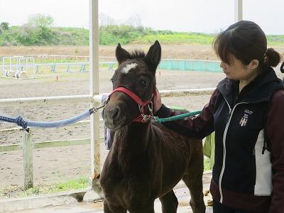 乗馬で得られる本当の幸せ
