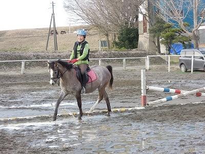 乗用馬ハクニーのプロポーション