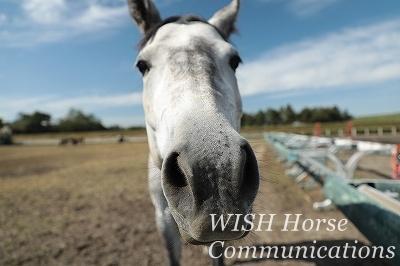 馬の愛を感じる乗馬