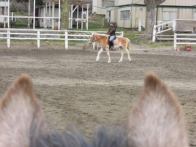 馬の話を真摯に受け止めていますか?