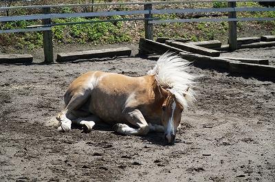馬の輝くたてがみ