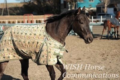 良く調教された馬