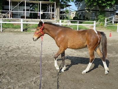 新馬調教 ちょっとずつ約束事と常識を作る