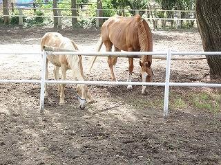馬の仲良し親子のようです