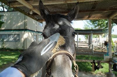 馬に人に誠実ですか