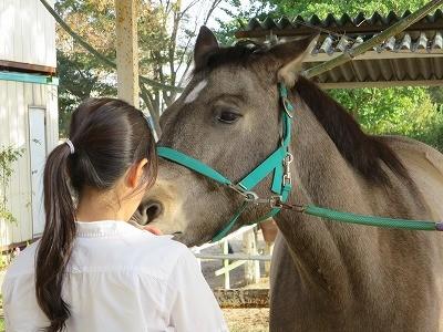馬との幸せな暮らし