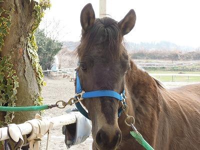馬がチップとデールそっくりに