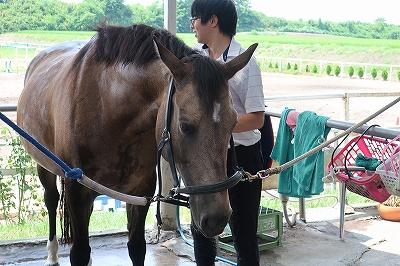 お手入れで馬とハッピーコミュニケーション