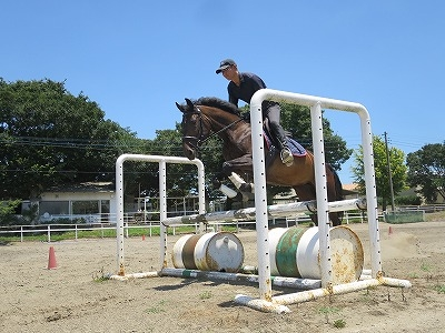 馬は障害に向けたら必ず飛ぶように調教できます