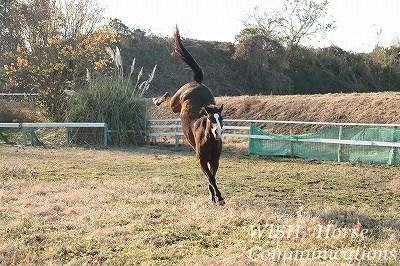 元気いっぱいの馬