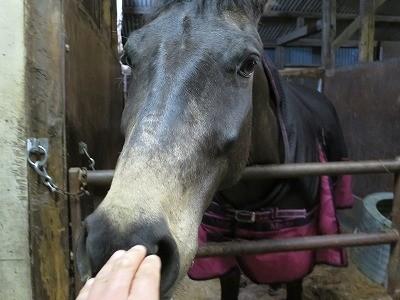 馬とのコミュニケーションを大切にする