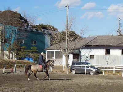 本当の乗馬は楽しい!