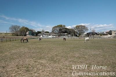 集団放牧をしている乗馬クラブ